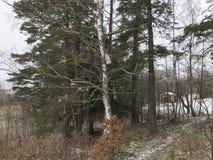 День снега vinter дома леса дерева smal Стоковые Фотографии RF