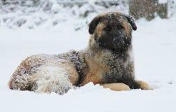 День снежка Стоковые Фотографии RF