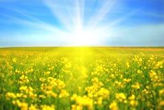 день солнечный Стоковая Фотография RF