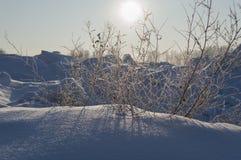День Солнце в зиме стоковые изображения rf