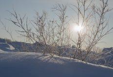 День Солнце в зиме стоковая фотография