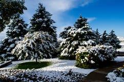 День страны чудес зимы Вайоминга Стоковое фото RF