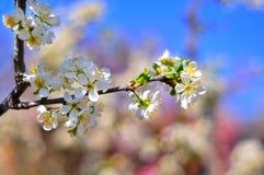 Предпосылка яркой весны солнечная Стоковое Фото