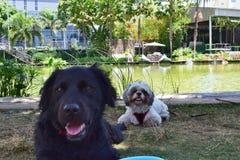 День Doggie вне Стоковая Фотография RF