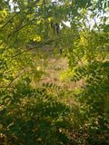 День Gioomy в последней осени стоковое фото rf