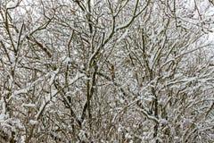 День ` s зимы стоковые фотографии rf