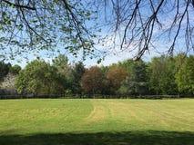 Дендропарк через накошенную лужайку Стоковая Фотография RF