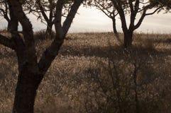2 дерева подсвеченного на холме Стоковые Фото