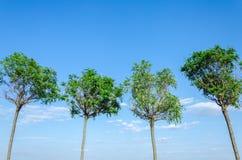 4 дерева против неба Стоковые Фотографии RF