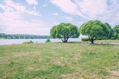 2 дерева, река и голубое небо Природа и зеленая трава Стоковая Фотография