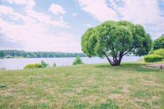 2 дерева, река и голубое небо Природа и зеленая трава Стоковые Фото