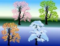 4 дерева сезонов на светлой предпосылке стоковые фотографии rf