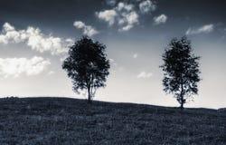 2 дерева na górze холма стоковое фото