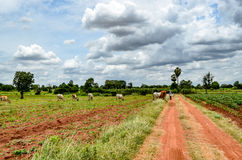 Деревенская ферма в Таиланде Стоковые Фотографии RF
