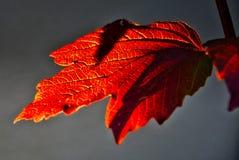 Деревенские и задние лист падения Lit Стоковая Фотография RF