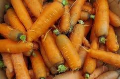 Деревенские моркови Стоковое Изображение