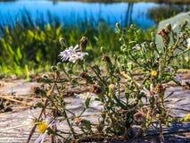 Деревенские цветки Стоковая Фотография RF