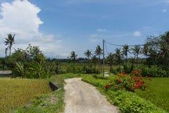 Деревенский балийский ландшафт лета стоковые изображения