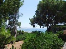 Деревенский вид растительности в Palma de Mallorca стоковые изображения