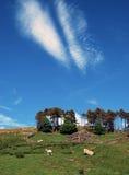 Деревенский вид участков земли Йоркшира стоковая фотография rf