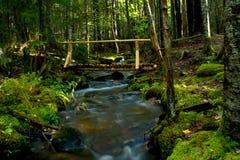Деревенский деревянный мост над потоком в древесинах Стоковое Изображение RF