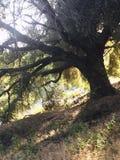 Деревенский, красота, дерево, заход солнца, страна Стоковое Изображение