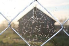 Деревенский ландшафт, сеть паука в тумане Стоковая Фотография RF