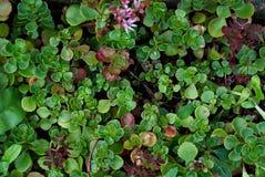 Деревенский макрос снял кактуса - тропического завода с полем малой глубины Succulent естественной предпосылки Стоковое Изображение