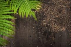Деревенский папоротник естественной предпосылки сочный зеленый выходит рамке деревянная предпосылка сельской местности стены стоковые изображения