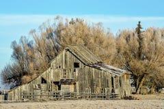 Деревенский старый амбар с деревьями вербы Стоковое фото RF