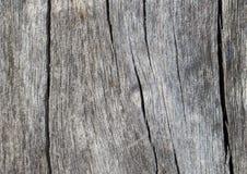 Деревенское деревянное фото крупного плана текстуры Холодная серая деревянная предпосылка Стоковая Фотография RF