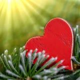 Красное сердце на зеленом растении стоковое фото