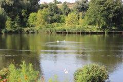 Деревенское озеро стоковые изображения rf