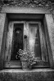 Деревенское окно с potted заводом Стоковые Изображения