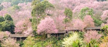 Деревня в розовой земле Стоковые Изображения RF