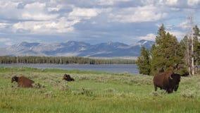 Деревня озера, национальный парк Йеллоустона, США стоковое фото rf