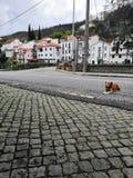 Деревня 2019 Португалии стоковая фотография