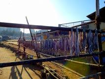 Деревня Bandra Chuim рыб засыхания Стоковые Изображения RF