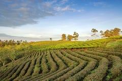 Деревня Cau Dat, город Lat Da, провинция Lam Dong, Вьетнам стоковые фотографии rf