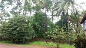 Деревня Goan Стоковая Фотография