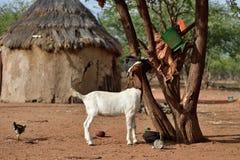 Деревня Himba, Намибия Стоковые Фотографии RF