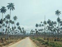 Деревня Walarano, остров Malekula/Вануату - 9-ОЕ ИЮЛЯ 2016: тропическая плантация кокоса с дорогой для экспорта копры стоковое фото rf