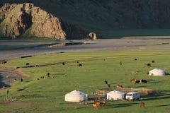 Деревня Yurts в Монголии Стоковые Фото