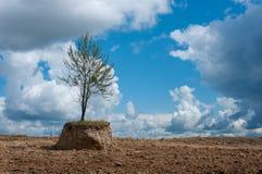ДеревоÂ в поле Стоковое Изображение RF
