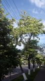 Дерево акации в Армении Стоковое Изображение RF