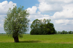 Дерево ландшафта лета Стоковое Изображение RF