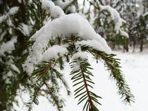 Дерево лапки Стоковые Фотографии RF