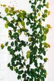 Дерево альпиниста на стене Стоковые Изображения