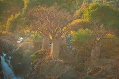 Дерево баобаба в Намибии Стоковые Фотографии RF