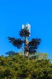 Дерево башни сотового телефона Стоковые Изображения RF
